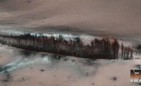 Υπάρχει φυτική ζωή στον Άρη; (Βίντεο)