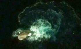 Γιγαντιαίο θαλάσσιο «τέρας» σε φωτο της Google