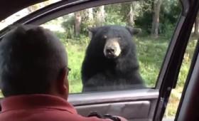 Μπαμπά, η αρκούδα άνοιξε την πόρτα σου!