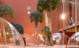 Indoors forest: ένα δάσος για το σπίτι ή το γραφείο