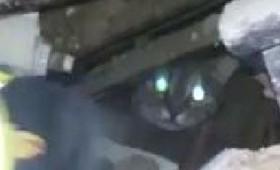 2 γάτες βρέθηκαν ζωντανές 16 μέρες μετά το σεισμό