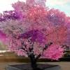 Το δέντρο-έργο τέχνης των 40 καρπών