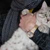 Η «ψυχική» γάτα που περνάει μέσα από τοίχους