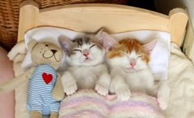 Αυτά τα γατάκια αρνούνται να κοιμηθούν χώρια (βίντεο)