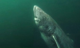 Το μυστικό της μακροζωίας των καρχαριών (vid)