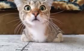 Πώς αντιδρά μια γάτα σε μια ταινία τρόμου (vid)