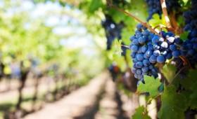 Οι θεραπευτικές ιδιότητες του κρασιού