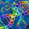 Οι σεξουαλικές προτιμήσεις είναι θέμα DNA