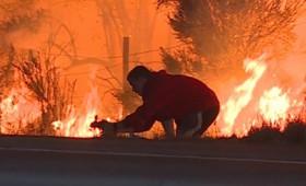 Έσωσε άγριο κουνέλι από τη φωτιά στην Καλιφόρνια (vid)