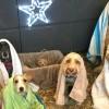 Η Αγία Οικογένεια των Σκύλων έγινε viral