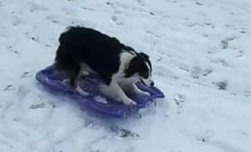Σκύλος κάνει σνόουμπορντ και γίνεται viral (vid)