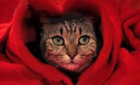 Ο Βαλεντίνος μου είναι η… γάτα μου! (Pictorial)