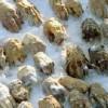 Σιβηρία: Βρέθηκε τσάντα με 54 κομμένα χέρια