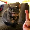 Στις γάτες δεν αρέσουν οι άσεμνες χειρονομίες (vid)