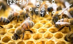 Οι μέλισσες μπορούν να κατανοήσουν το μηδέν (vid)
