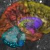 Βρέθηκαν νέοι άγνωστοι νευρώνες στον ανθρώπινο εγκέφαλο (vid)