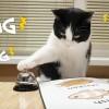 Pusic: Ένας πεινασμένος γάτος στο εστιατόριο (vid)