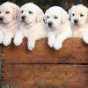 Το χρώμα του σκύλου δείχνει πόσα χρόνια θα ζήσει (vid)
