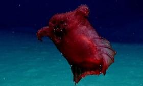 Θηριώδες ακέφαλο «κοτόπουλο» στο βυθό του ωκεανού