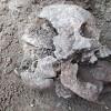 """Παιδί """"βαμπίρ"""" βρέθηκε σε τάφο του 5ου αιώνα στην Ιταλία (vid)"""