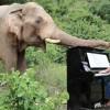 Ο άνθρωπος που παίζει πιάνο στους ελέφαντες (vid)