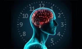 Κιρκάδιοι ρυθμοί: Το αρχαιότερο ρολόι που ελέγχει τη ζωή μας (vid)
