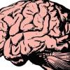 Εγκεφαλικά σήματα της σκέψης μεταφράστηκαν σε κατανοητή συνθετική ομιλία (audio)
