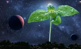 Έρχονται λάχανα και μπρόκολα από τη Σελήνη