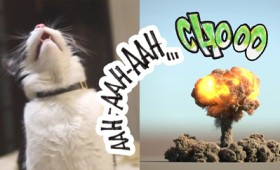 Δείτε τι συμβαίνει όταν ο γάτος Pusic φταρνίζεται (vid)