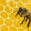 Οι μέλισσες μπορούν να λύνουν μαθηματικά προβλήματα (vid)