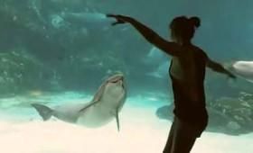 Δελφίνι απολαμβάνει τις γυμναστικές επιδείξεις νεαρού κοριτσιού (vid)