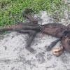 Μυστηριώδες πλάσμα βρέθηκε στη Φλόριδα (vid)