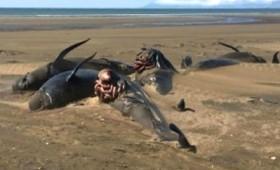 Νέοι μυστηριώδεις θάνατοι φαλαινών στην Ισλανδία (vid)