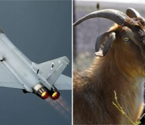 Βρετανοί σκοτώνουν χιλιάδες αγροτικά ζώα στην Κύπρο