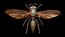 Οι μέλισσες πεθαίνουν – Μπορούμε να βάλουμε στη θέση τους συρφίδες; (vid)