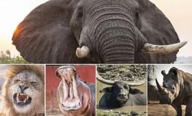 Στον Πηνειό ζούσαν κάποτε ελέφαντες, ιπποπόταμοι και ρινόκεροι (vid)
