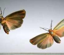 Δείτε τα πρώτα ιπτάμενα όντα στον κόσμο σε αργή κίνηση (vid)