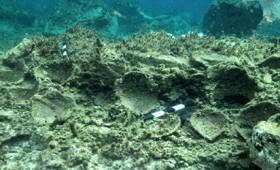 Ανακαλύφθηκε υποβρύχια Πομπηία στις ακτές της Δήλου