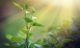 Τα φυτά αποίκισαν τη γη 20 εκατ. χρόνια νωρίτερα