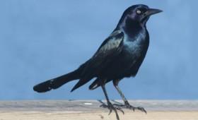 Ανεξήγητη πτώση δεκάδων πουλιών στη Βοστόνη