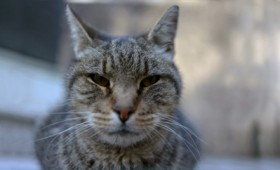 Cat Patrol: Καθαρίζοντας τη Νέα Υόρκη από τα τρωκτικά
