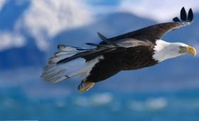 Ο κόσμος από το ύψος των πουλιών (βίντεο)