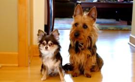 Το καρφί: Ξεκαρδιστικό βίντεο με δύο σκυλάκια…