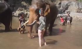 Ο ελέφαντας, η τουρίστρια και το βολ πλανέ (βίντεο)