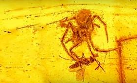 Βρέθηκε «εξωγήινο» έντομο μέσα σε κεχριμπάρι