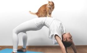 """Η επανάσταση στο fitness λέγεται """"Cat Yoga"""" (Νιάου!)"""