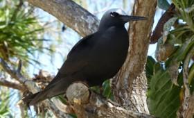 Το δέντρο που σκοτώνει πουλιά χωρίς λόγο (βίντεο)