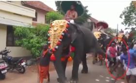 Ιερός ελέφαντας κλωτσάει στο στήθος έναν ασεβή