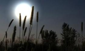 Τα φυτά χορεύουν στους ρυθμούς της Σελήνης