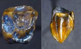 Δύο δόντια ξαναγράφουν την ιστορία της ανθρωπότητας
